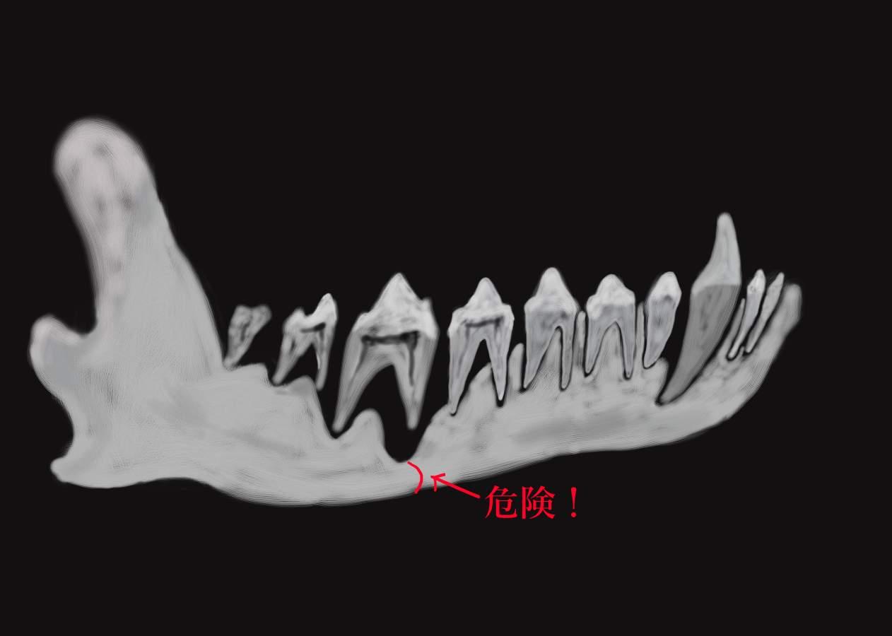 犬の顎骨エックス線写真風